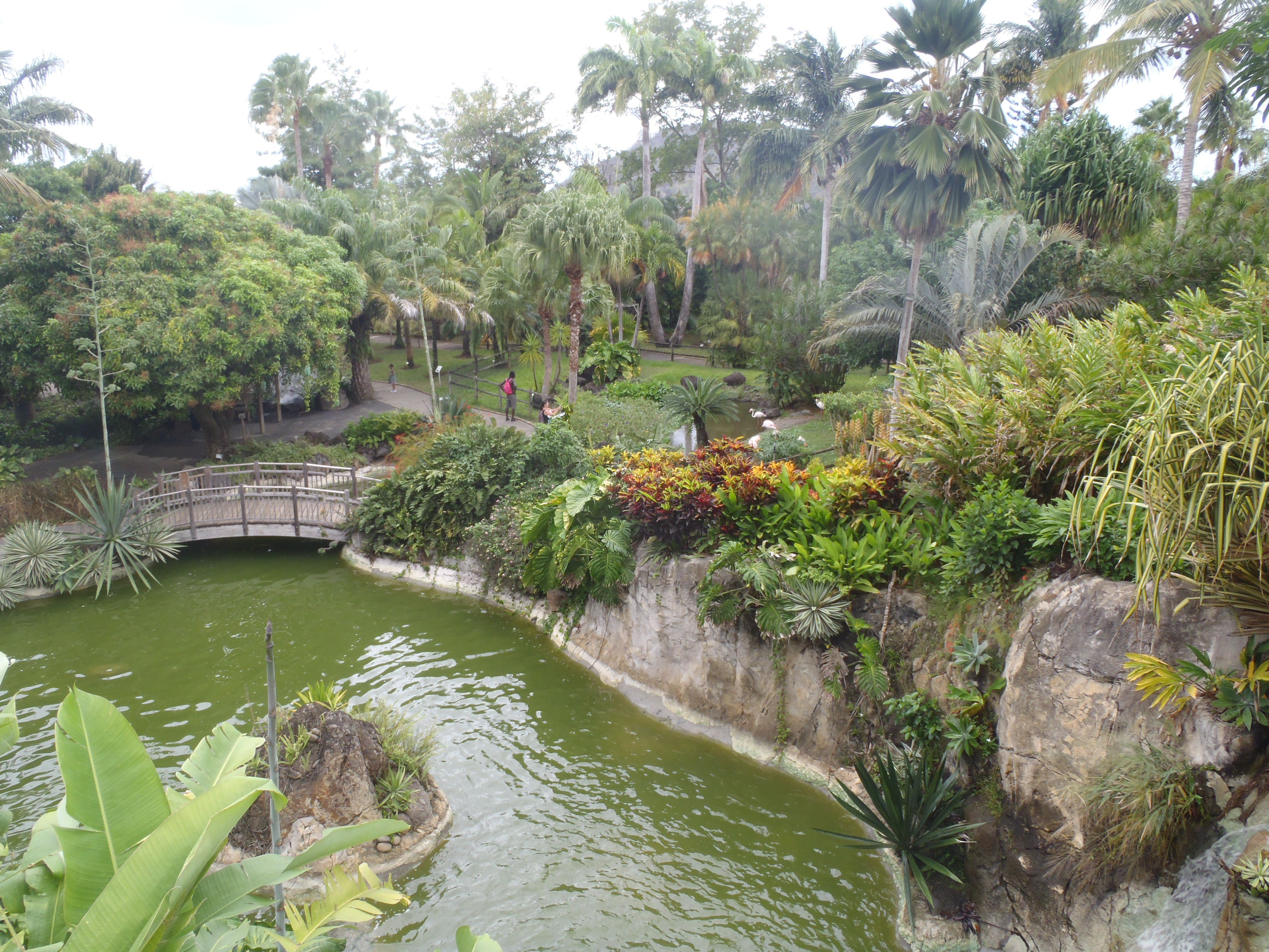 Jardin botanique deshaies guadeloupe le galdi for Jardin botanique guadeloupe